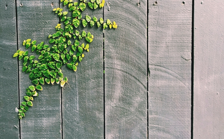 clear-wood-coating-green-leaf-on-gray-wooden-fence-212265